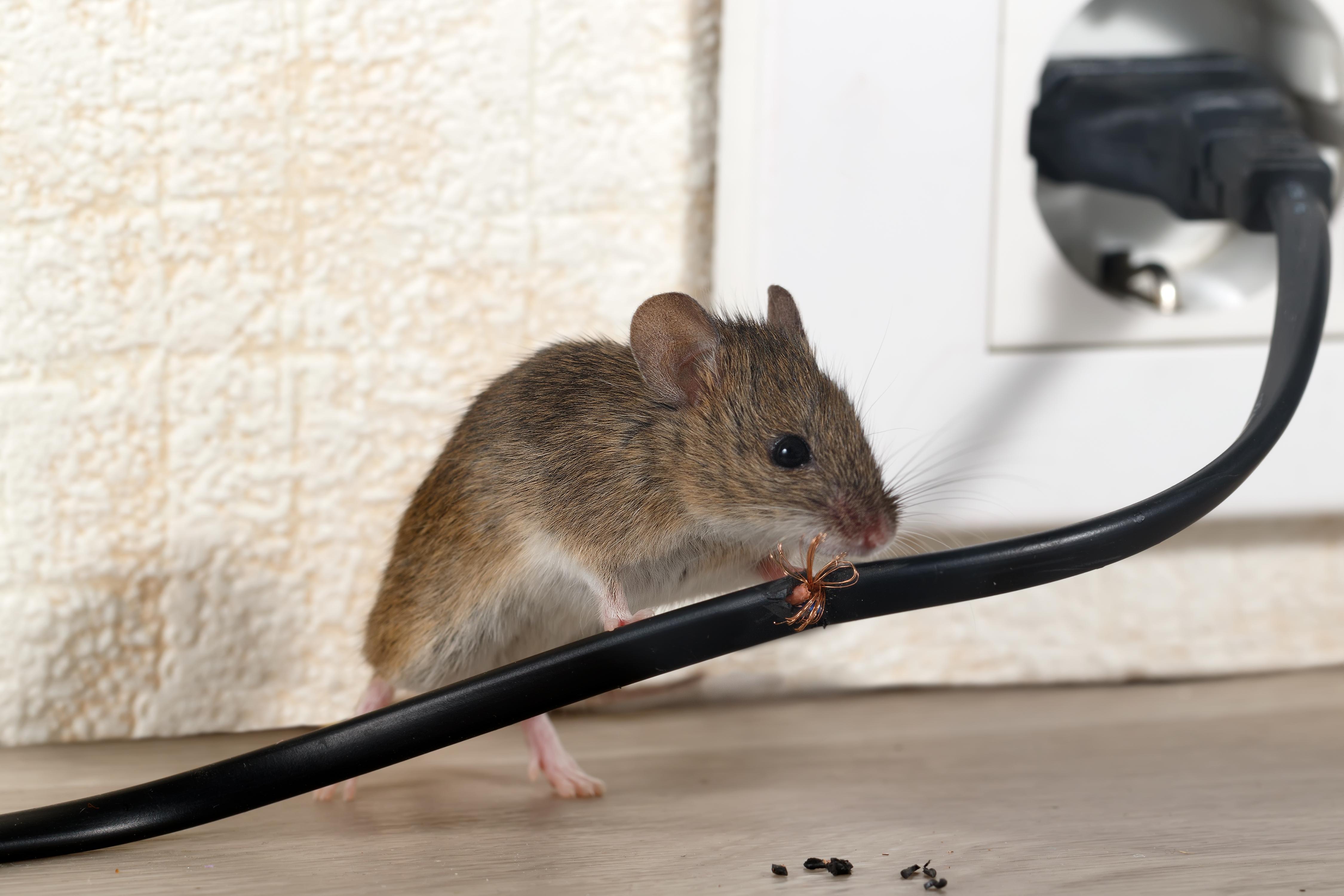 Pest & Rodent Infestations
